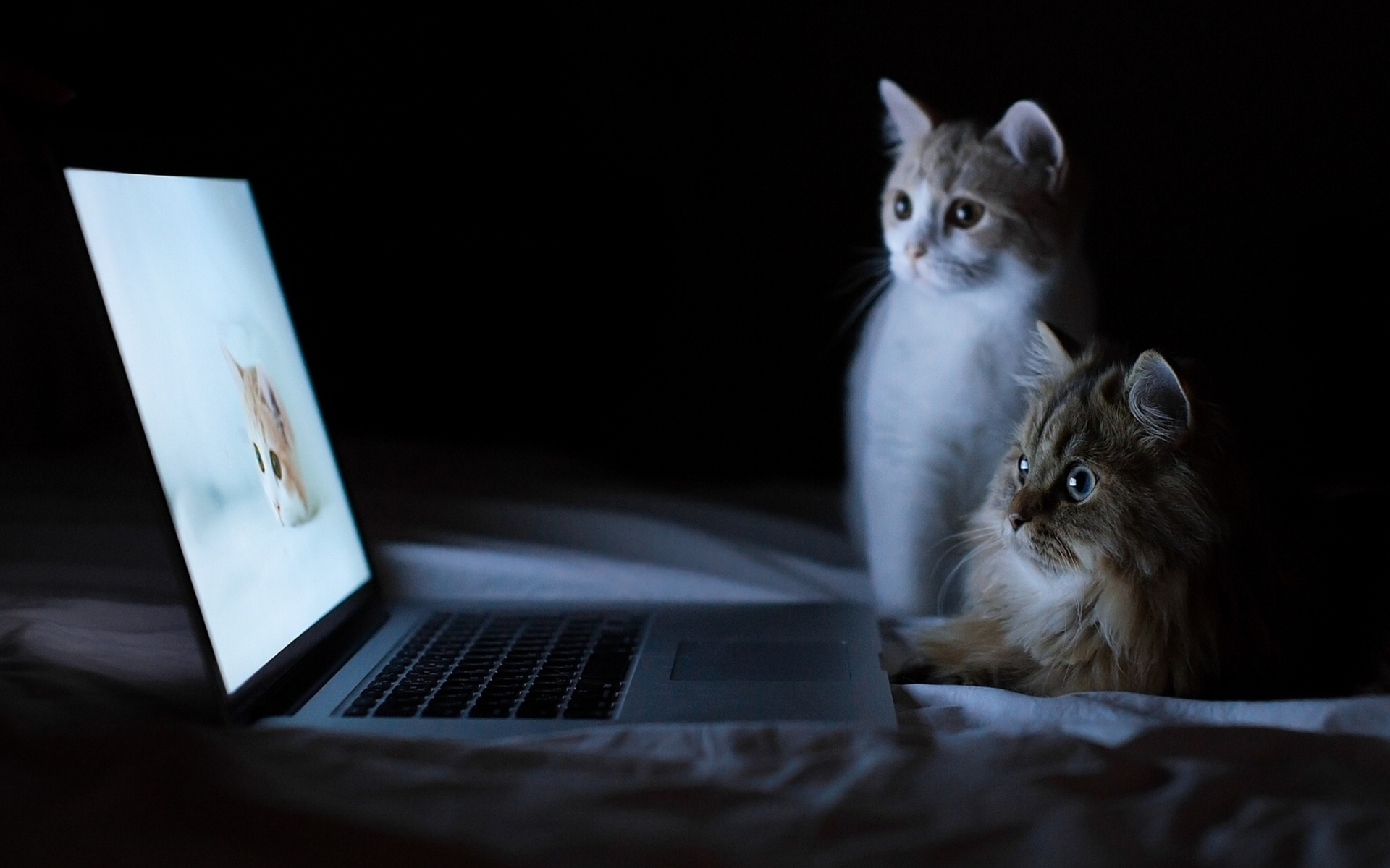 Banner 11 ways cats would react while watching viral videos 1472202666