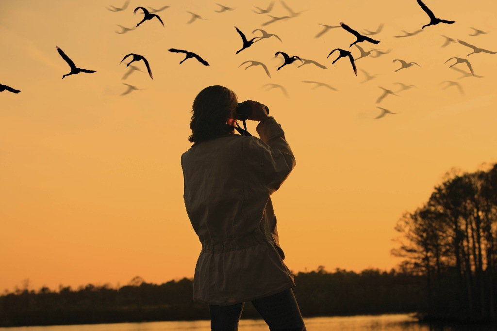 Bird lover are you 9 birding tips for the beginner bird watcher
