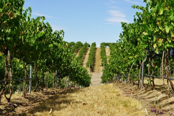 If you love wine here are 5 wineries you must visit