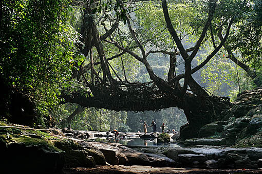 India you beauty 7 things you didnt know about the root bridge in meghalaya